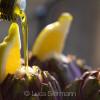 Artischocke mit Knoblauch und Zitrone